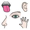 Piirroskuvassa ihmisen kieli, korva, silmä, nenä ja käsi.