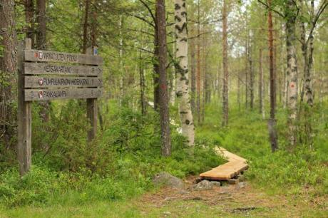 Valokuvassa on metsää retkeilyalueella ja puita tehty pitkospolku.