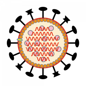 Piirroskuva viruksesta