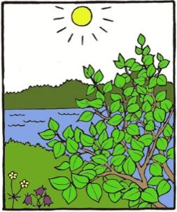 Piirroskuvassa on aurinkoinen järvimaisema ja kasvillisuutta.