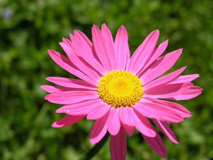 kukka ja mehiläinen erotiikka sivut
