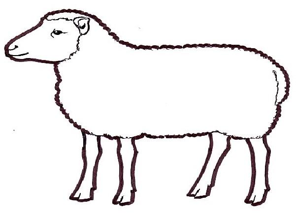 Lammas Piirretty