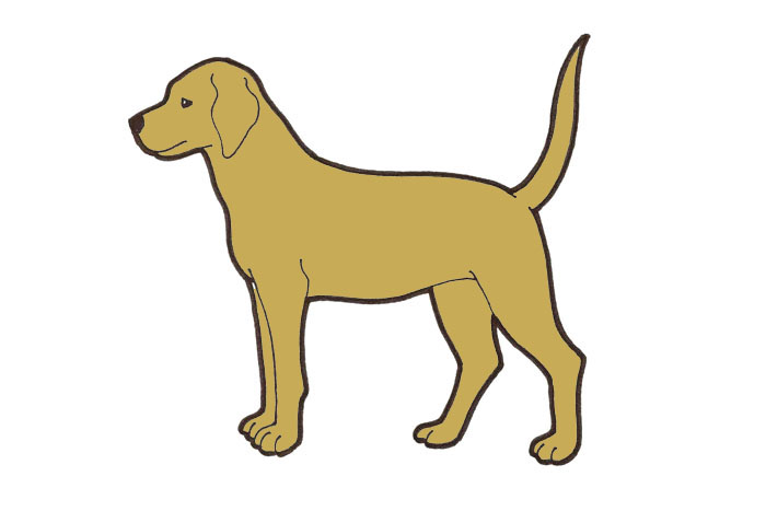 koiran anaalirauhanen Somero