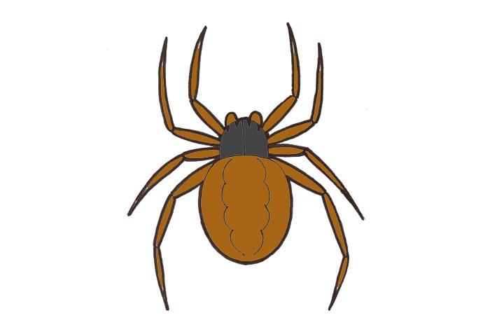 Hämähäkki Piirretty