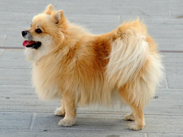 Maailman Söpöin Koiranpentu