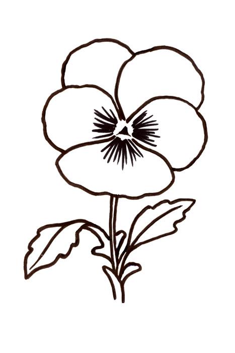 Värityskuvia Kukka