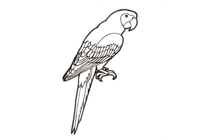 Värityskuva Eläin
