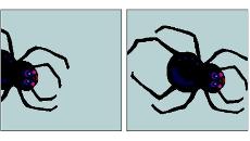 Kaksi piirroskuvaa hämähäkistä.