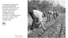Arkipäivän elämää -verkkokirjan mustavalkoisessa kuvassa ihmisiä kumartuneena perunapellolla.